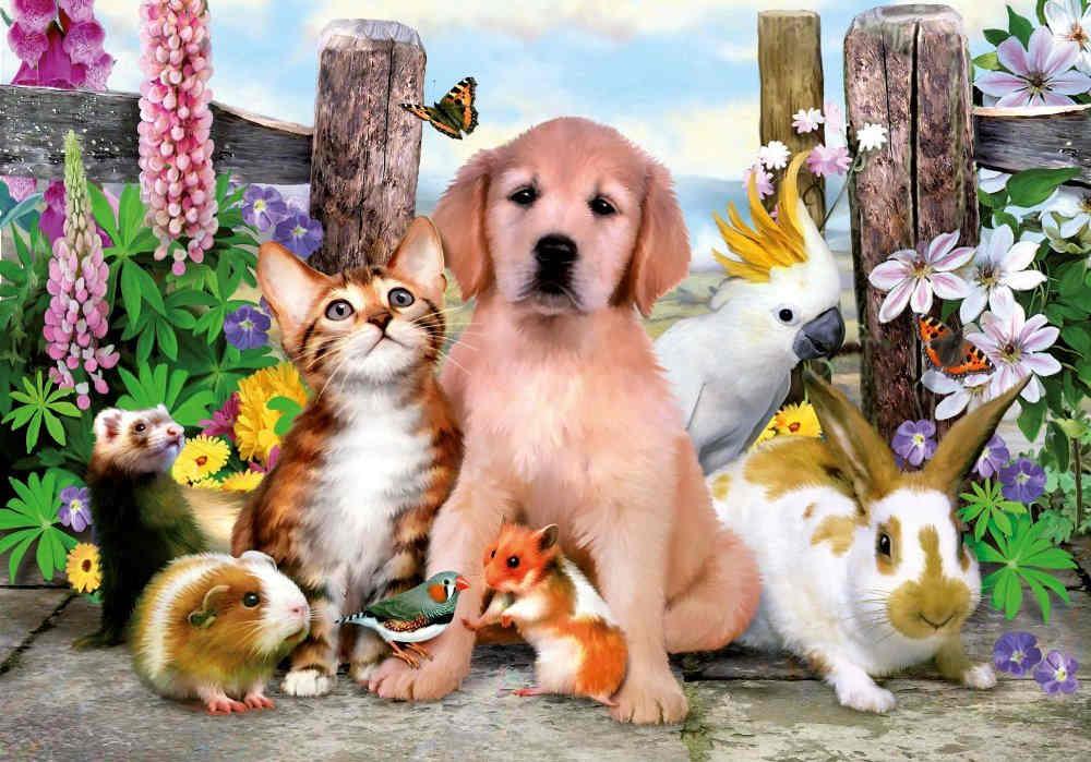 Įdomūs faktai apie gyvūnus