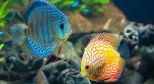 Братья наши меньшие - рыбки