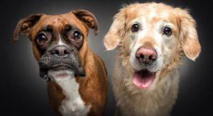 Братья наши меньшие - собаки