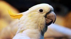 Братья наши меньшие - попугаи
